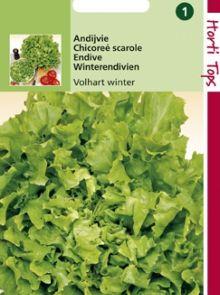 Andijvie Volhart Winter (zaad Cichorium endivia)