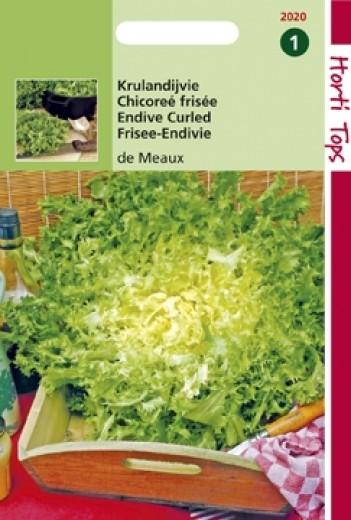 Krulandijvie De Meaux (zaad Cichorium endivia)