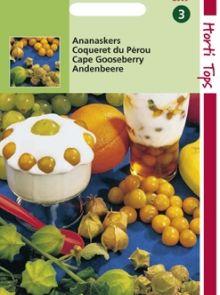 Ananaskers (Physalis edulis)