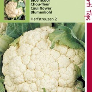 Bloemkool Herfstreuzen (zaad Brassica oleracea)