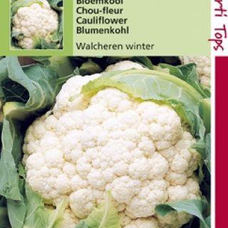 Bloemkool Walcheren Winter  (zaad Brassica oleracea)