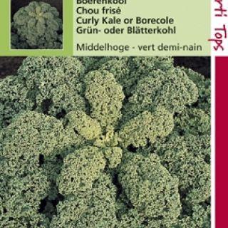 Boerenkool fijn gekrulde (zaad Brassica oleracea var. laciniata)