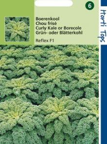 Boerenkool Reflex F1 hybride (zaad Brassica oleracea var. laciniata)