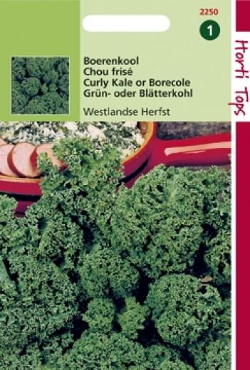 Boerenkool Westlandse Herfst (zaad Brassica oleracea var. laciniata)