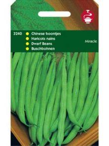 Stamslabonen Miracle (zaad Chinese boontjes, Phaseolus Vulgaris)  100 gr