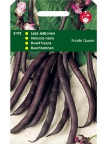 Stamprinses Purple Queen (Stamslabonen zaad 100 gram)
