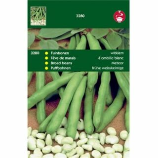 Tuinbonen Witkiem (bruinkokende tuinboon 100 gram)