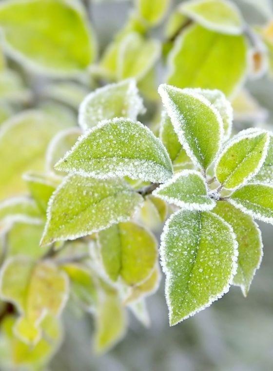 Wanneer zijn planten winterhard?