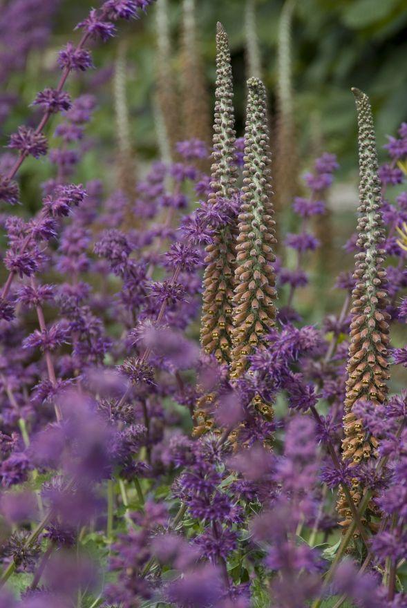 Planten Voor Bijen.Vaste Planten Borderpakket Voor Bijen 6 M2 Paars Roze Geel