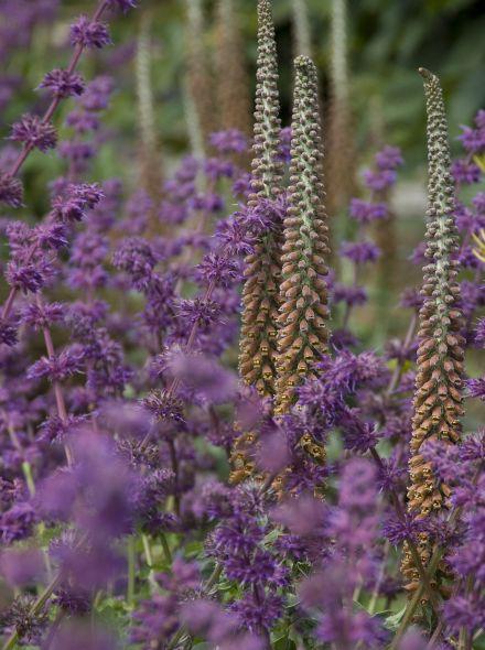 Vaste planten borderpakket voor bijen - 6 m2 (Paars - Roze - Geel)