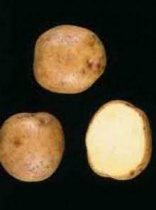 Dore pootaardappelen (1 kg, Dore is een vroege aardappel)
