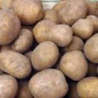 Gloria pootaardappelen  (2,5 kg, Gloria is een vroege aardappel)