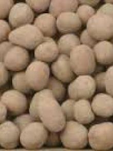 Michelle pootaardappelen (5 kg, Michelle is een vastkokende aardappel)