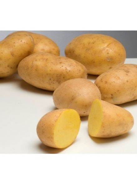 Agria pootaardappelen (2,5 kg, late kruimige aardappel)