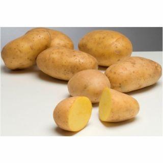 Agria pootaardappelen (5 kg, late kruimige aardappel)