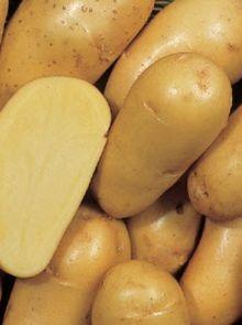 Charlotte pootaardappelen (1 kg, middenvroege vastkokende aardappel)