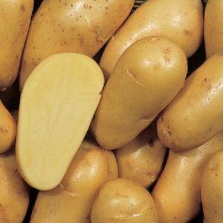 Charlotte pootaardappelen (5 kg, middenvroege vastkokende aardappel)