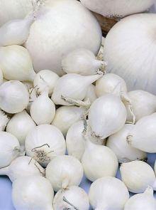 Snowball plantuien (1 kilogram, Helderwitte uien, van binnen en van buiten)