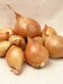 Sjalotten Golden Gourmet (1 kg plantuitjes, Gele sjalot)
