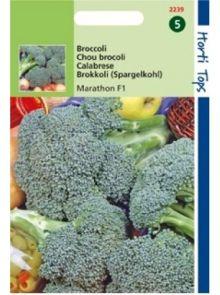 Broccoli Southern Comet (f1 zaad)
