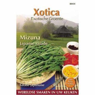 Mizuna of Xiu cai (Japanse salade zaad)