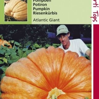 Pompoen Atlantic Giant (reuzenpompoenen zaad)