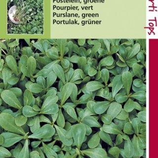 Postelein gewone groene (Posteleien zaad)