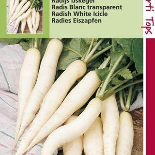 Radijs Ijskegel (lange witte radijs, zaad)