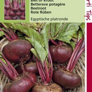 Rode Bieten Egyptische Platronde (Bietenkroot zaad)