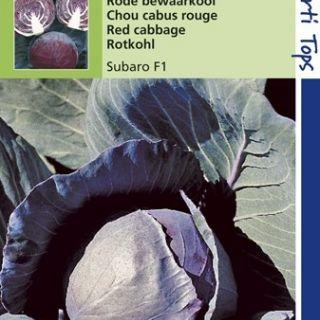 Rode kool Subaro (f1 hybride zaad)