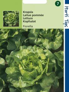 Kropsla Fiorella (botersla zaad)