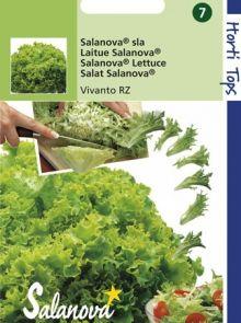 Kropsla Salanova Virtuose, Vivanto RZ (botersla zaad)