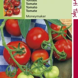 Tomaat Moneymaker (tomaten zaad)