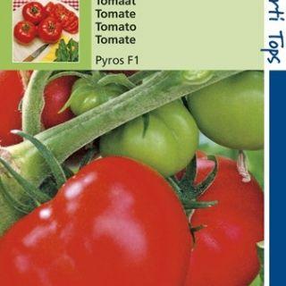 Tomaat Pyros F1 Hybride (zaad tomaten)