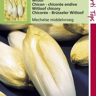Witlof Mechelse Middelvroeg (zaad)