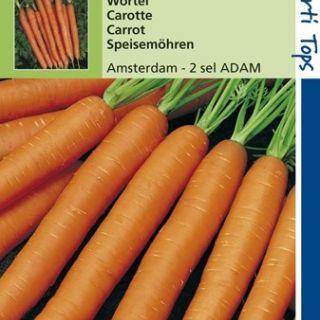 Wortelen Amsterdam 2 – sel Adam (wortelzaad, zomerwortel)