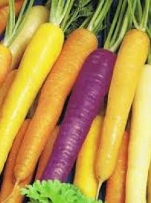 Wortelen Rainbow F1 Hybride (zaad gekleurde regenboog zomerwortels)