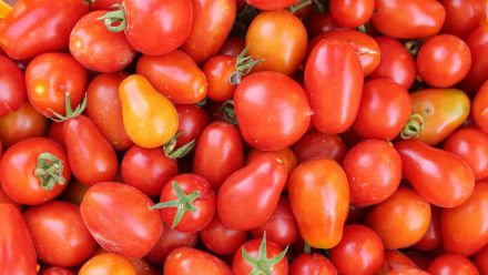 Pomodori tomaten (zaad Cocktailtomaatjes, pizzatomaten, soeptomaten)