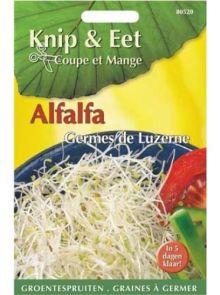 Knip & Eet Alfalfa kers (zaad groentespruiten Alfalfa)
