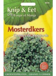 Knip & Eet Mosterd kers (zaad kiemspruiten mosterdkers)