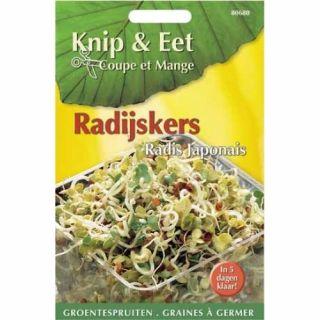 Knip & Eet Radijs kers, Daikon (zaad kiemspruiten radijskers)