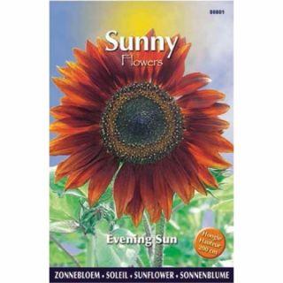 Sunny Sunflowers Evening Sun (zonnebloemzaden Avondzon, grote bruinrode bloemen)