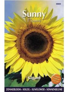 Sunny Sunflowers Giant (zonnebloemzaden, zeer hoge gele zonnebloem)