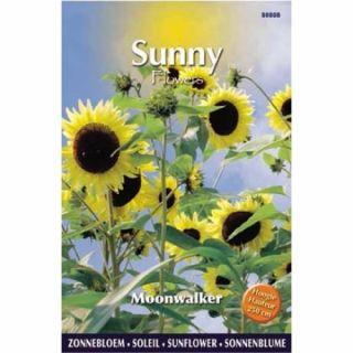Sunny Sunflowers Moonwalker (zonnebloemzaden, Sterk vertakkende geel bloeiende zonnebloem, 250 cm hoog)