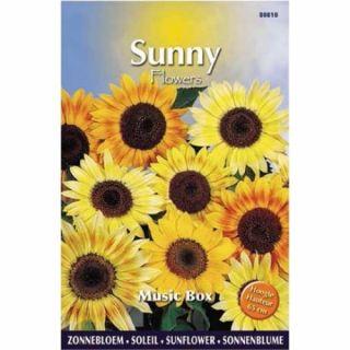 Sunny Sunflowers Music Box (zonnebloemzaden, laagblijvende geel bloeiende zonnebloem)