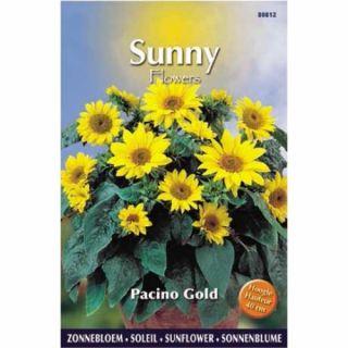 Sunny Sunflowers Pacino Gold (zonnebloemzaden, laagblijvende gele zonnebloem)