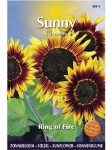 Sunny Sunflowers Ring of Fire (zonnebloemzaden, meerkleurige zonnebloem)