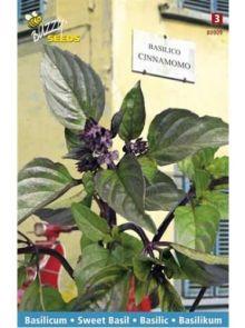 Basilicum Cinnamomo of Cannella (zaad, Kaneelbasilicum)