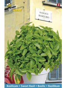 Basilicum Bascuro (zaad, fijnbladige basilicum)
