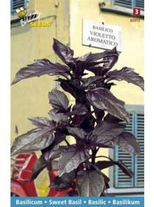Basilicum Violetto Aromatico (zaad, paarse basilicum)